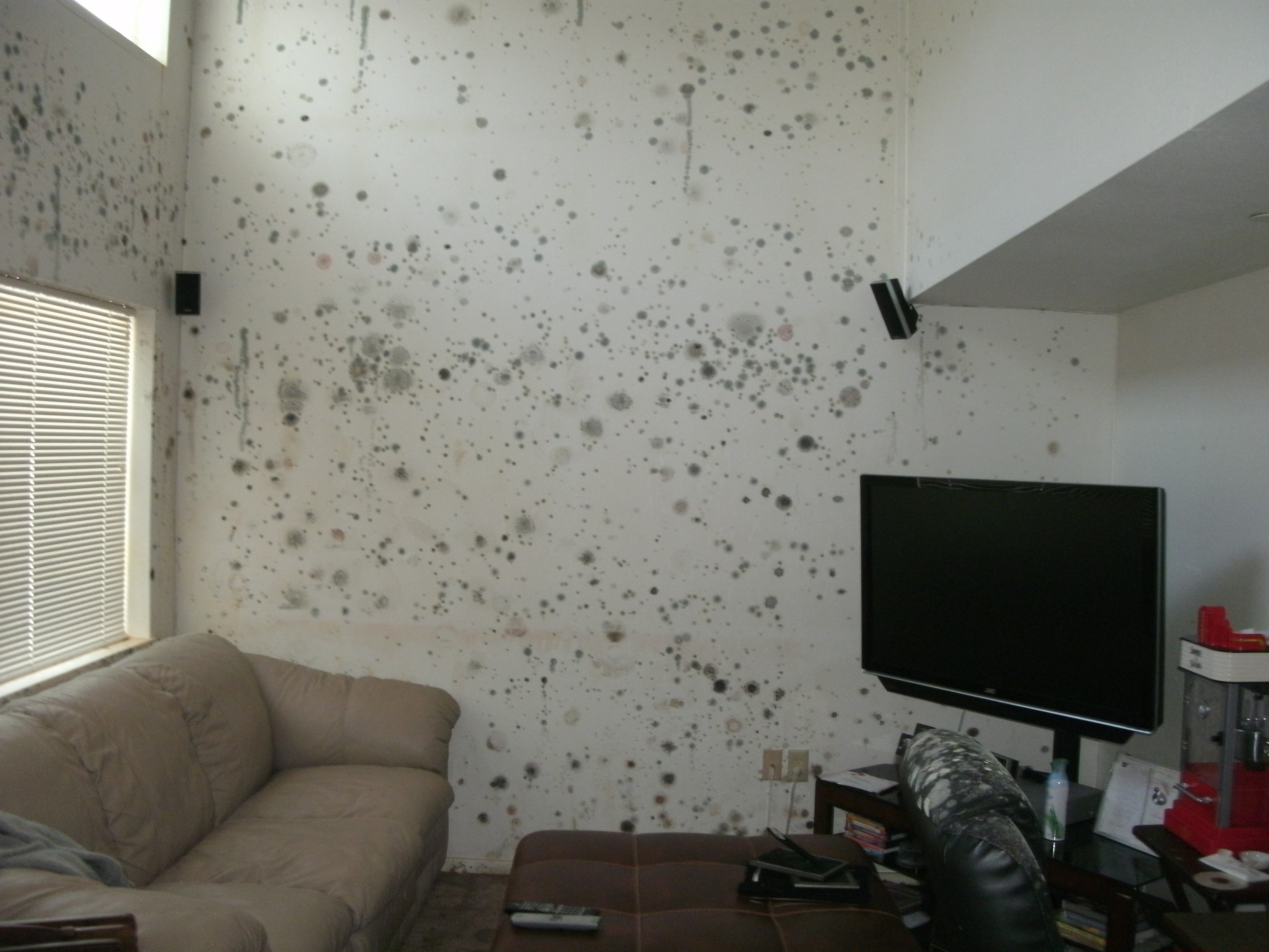 Preventing mold aurora military housing - What to do about mold in house ...