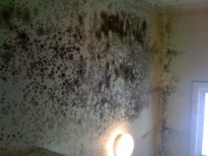 mold grows among a lighting fixture