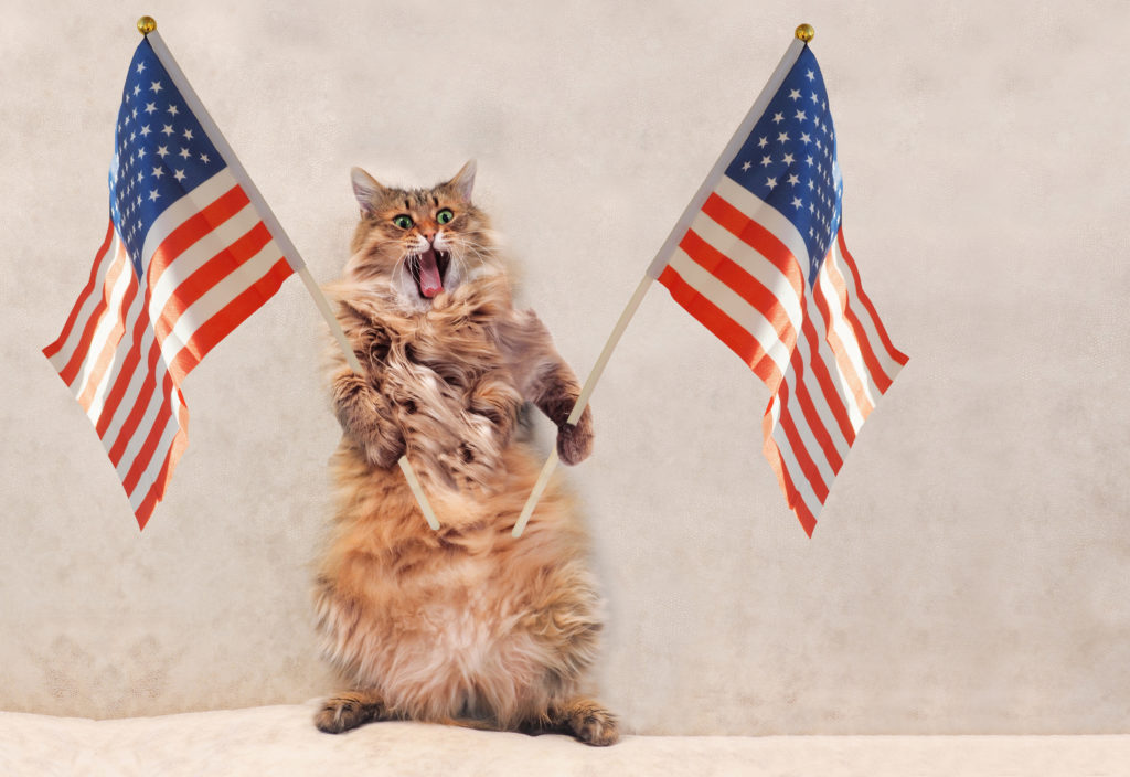 cat holding American flags