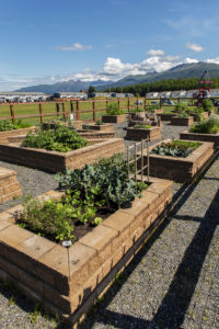 multiple garden beds in the community garden with the chugach mountains in the distance